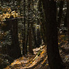 Squaw Valley Creek Trail.