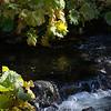 Squaw Valley Creek.