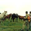 Erdélyi Szigethegyseg, 1994