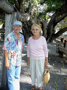 at the Banyan tree