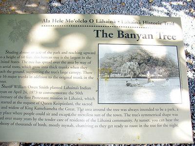 Banyan tree legend