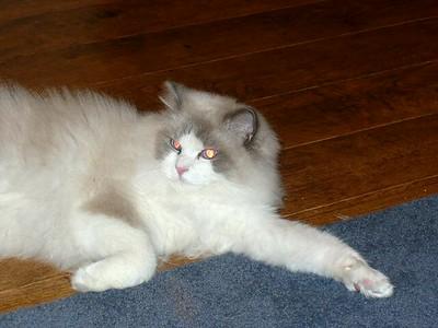Sammy -- Cathy's cat