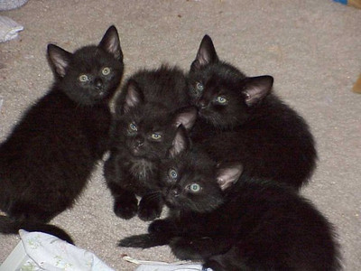 Midnite's 4 kittens. They all live with Jo now, Pat. It worked out fine buddy.