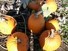 pumpkins !!!
