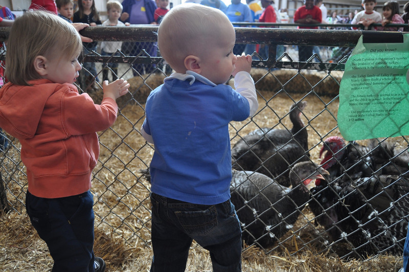 NCSU Farm Animal Days