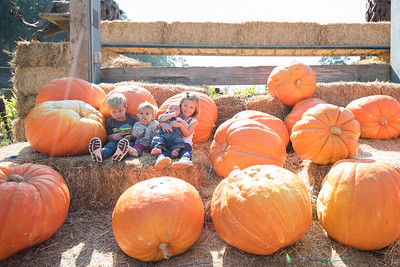 Pumpkin Patch with Jacksons 2017