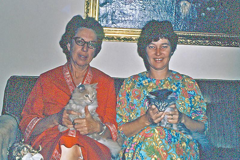 Maxine & Cherry and kitten clan, Coronado, Ca.