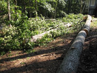 Rick's tree cutting