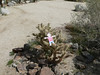 Ouch!!!  Flat Trevor goes off-path and ends up tangled in a cactus!  We tried to warn him!