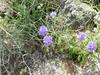 Pretty little purple flowers