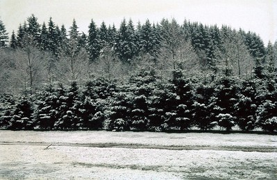 The beautiful Belgian Ardenne winter landscape.