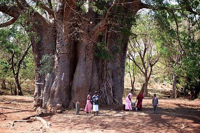 Baobab tree, Tanzania.