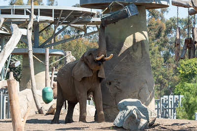 SD Zoo 20200904