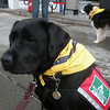 October 6 2007 Gander all decked out and ready go on the Grand Parade with Riverdog!