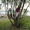 Tree climbing at Lowman Beach in West Seattle.