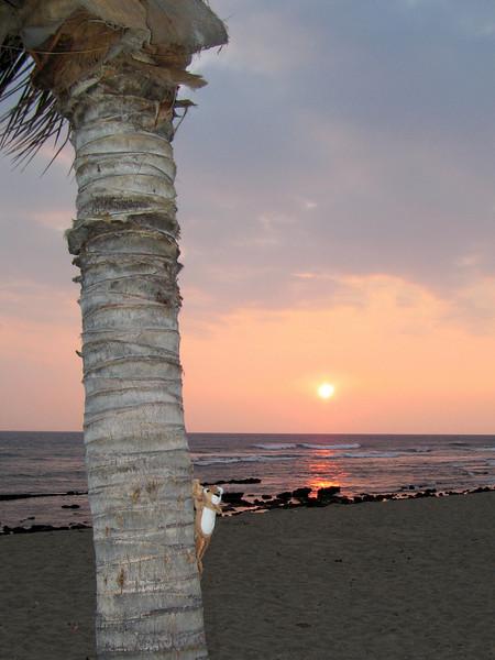Simba enjoys sunset @ Old Airport Beach