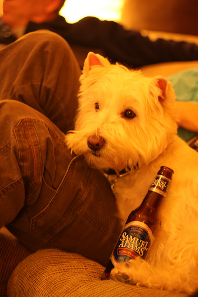 Can't keep the beer away from Gus