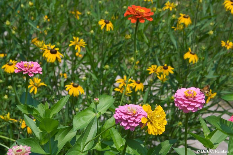 Susan Nelson's Garden
