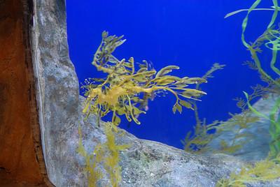 Visit to Underwater World, Sentosa, Singapore