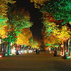 Unter de Linden - Festival of Lights