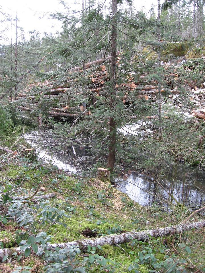 Roe Creek