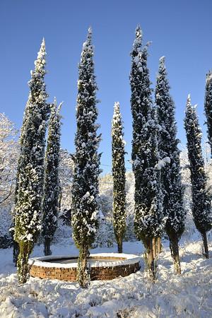 Cypress Henge!