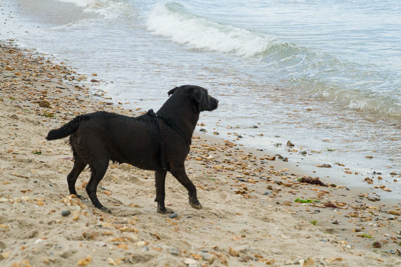 Maisie, Hengistbury Head