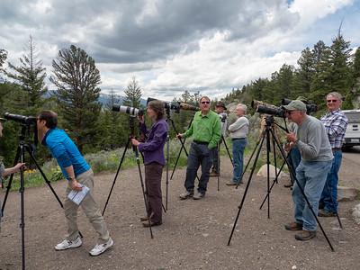 Unabashed bird photographers