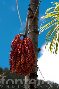 Hawaii.09.02.06.-665