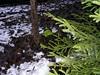 Interesting green moss