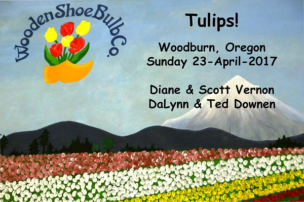 Tulips-Wooden Shoe-Woodburn-23-Apr-2017