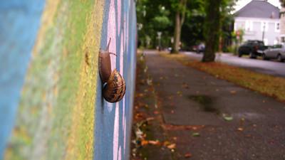 Urban wildlife.