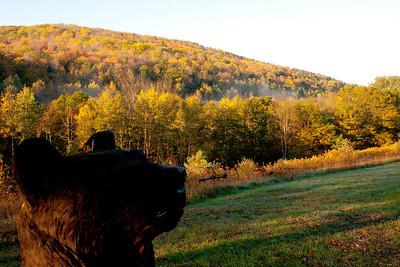 Vermont_Oct_2010-4156