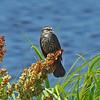 Hilton Head bird life