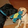Apollo with toy