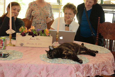 Here is one of their cats while we're looking at wedding pictures with Loralyn