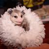 Baby Opossum 2016 006