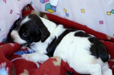 Katie's Puppy