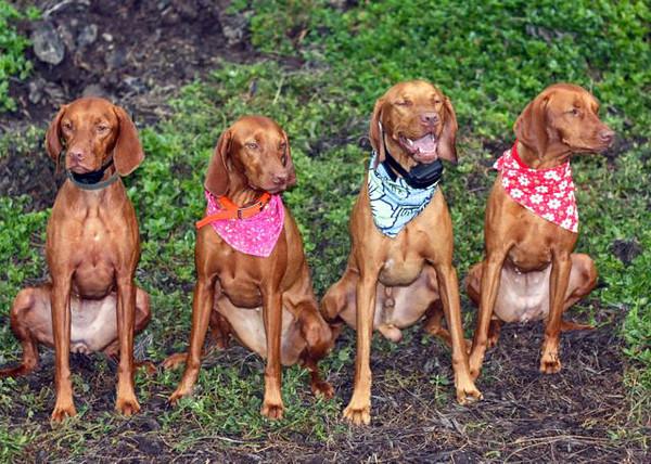 The FAB FOUR 2-year olds:  Cedar, Lehua, Max, & Ruby!