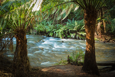 creek160613-019