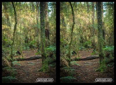 creek160613-157-3D