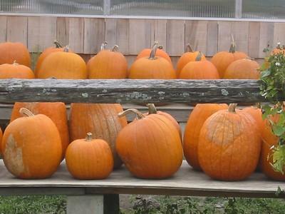 mmm...pumpkins