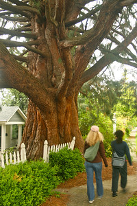 40th street tree, a must see.