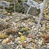 """O.C. Marsh Botanical Garden """"Living Stones"""""""