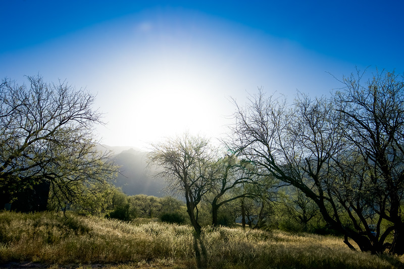 Catalina State Park Early Morning