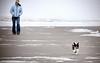 Missy running on the beach