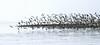 birds on Long Beach