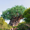 Man made tree at Animal Kingdom.  It is HUGE, there is a theater inside the base of it.
