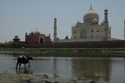 Agra: Taj Mahal from across the river.