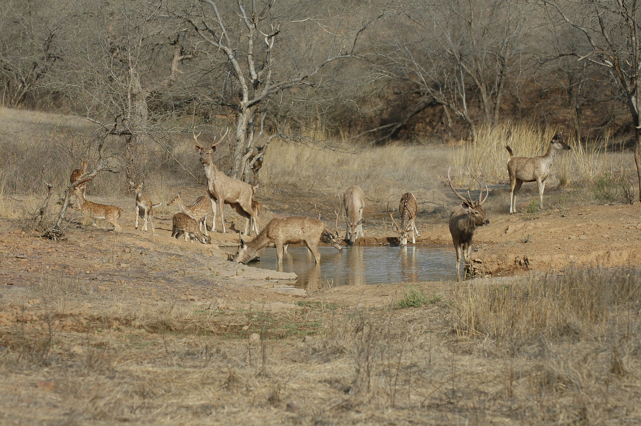 Ranthambore National Park: Watering hole